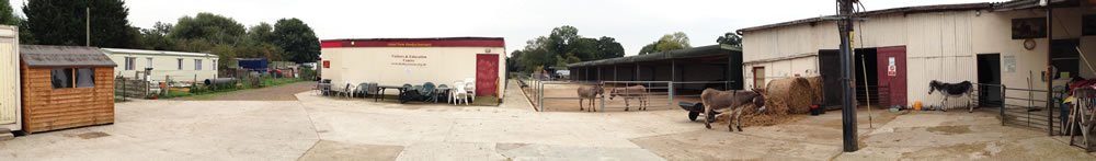 Part of the yard area at Island Farm Donkey Sanctuary.