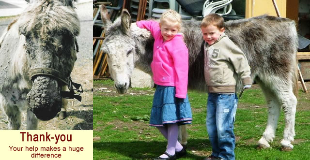 Donating money to help the donkeys makes a big difference.
