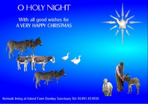 Happy Christmas from Island Farm Donkey Sanctuary 2013