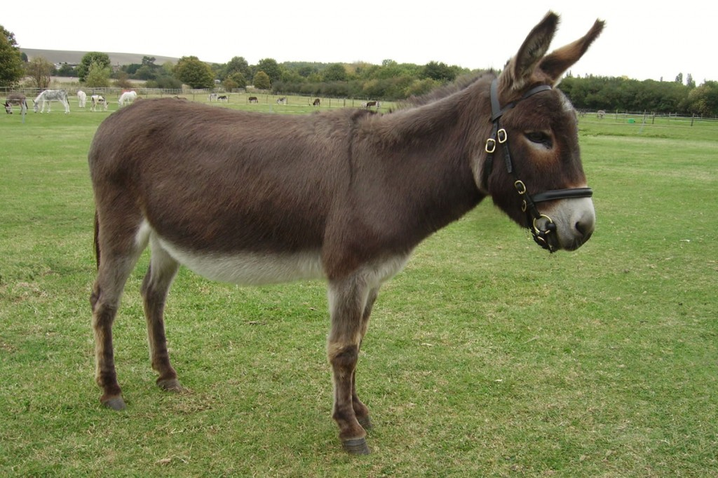 Diane is one of the donkeys that would have benefitted from a veterinary care centre if it had been available when she needed veterinary care.