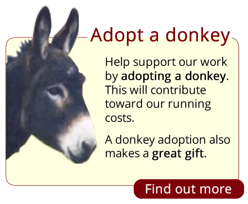 Adopt a donkey at Island Farm Donkey Sanctuary, England.