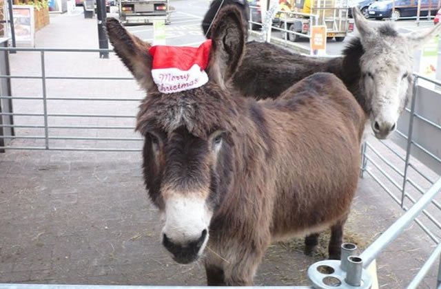 Donkeys Jack and Charlie wish all our friends and supporters a very Merry Christmas