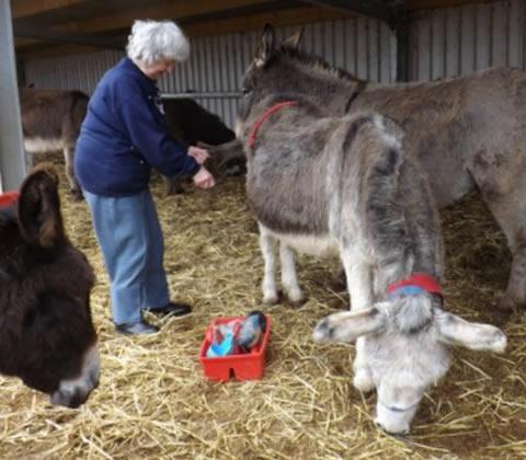 Donkey Grooming