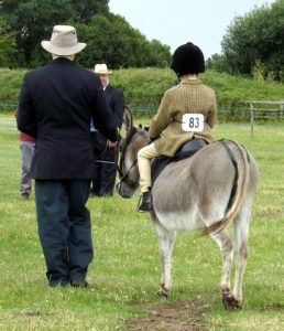 Donkey Show with Fun Dog Show @ Island Farm Donkey Sanctuary