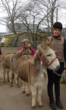 Donkeys Peter and Rudolf just out of the horsebox and about to make new friends at Wormwood Scrubs Pony Centre on 19th March 2015.