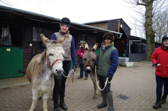 IFDS donkeys Peter and Rudolf arriving at Wormwood Scrubs Pony Centre, London.