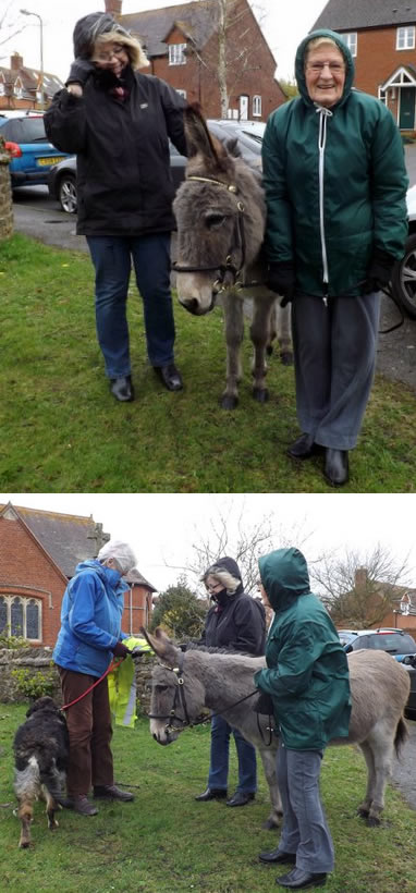 Tracey the donkey ready for a 2015 Palm Sunday event
