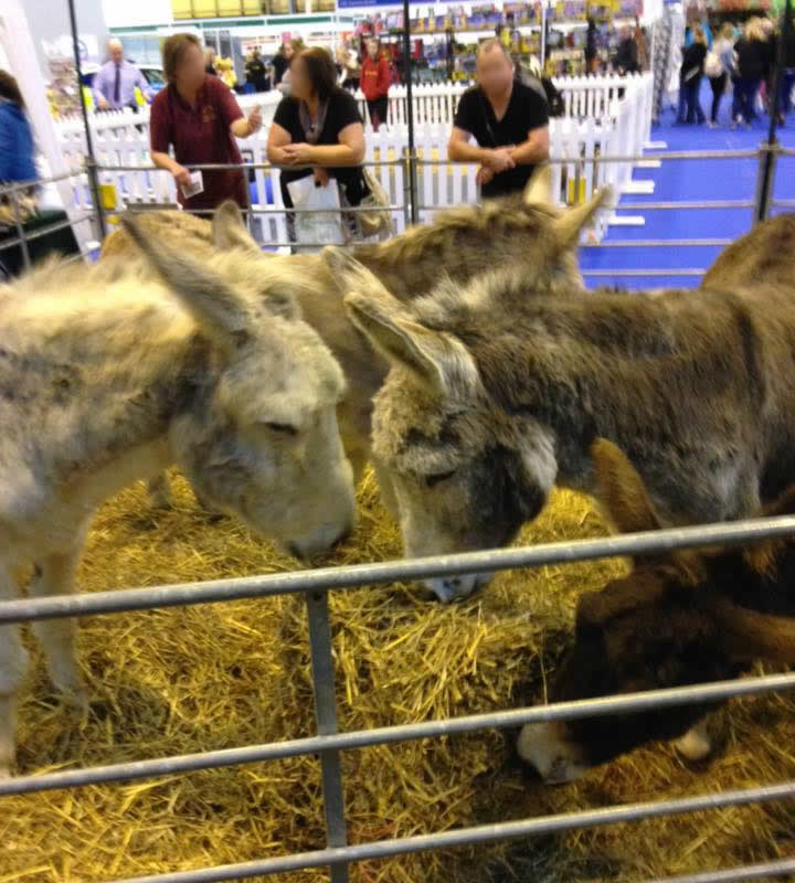 Island Farm Donkeys