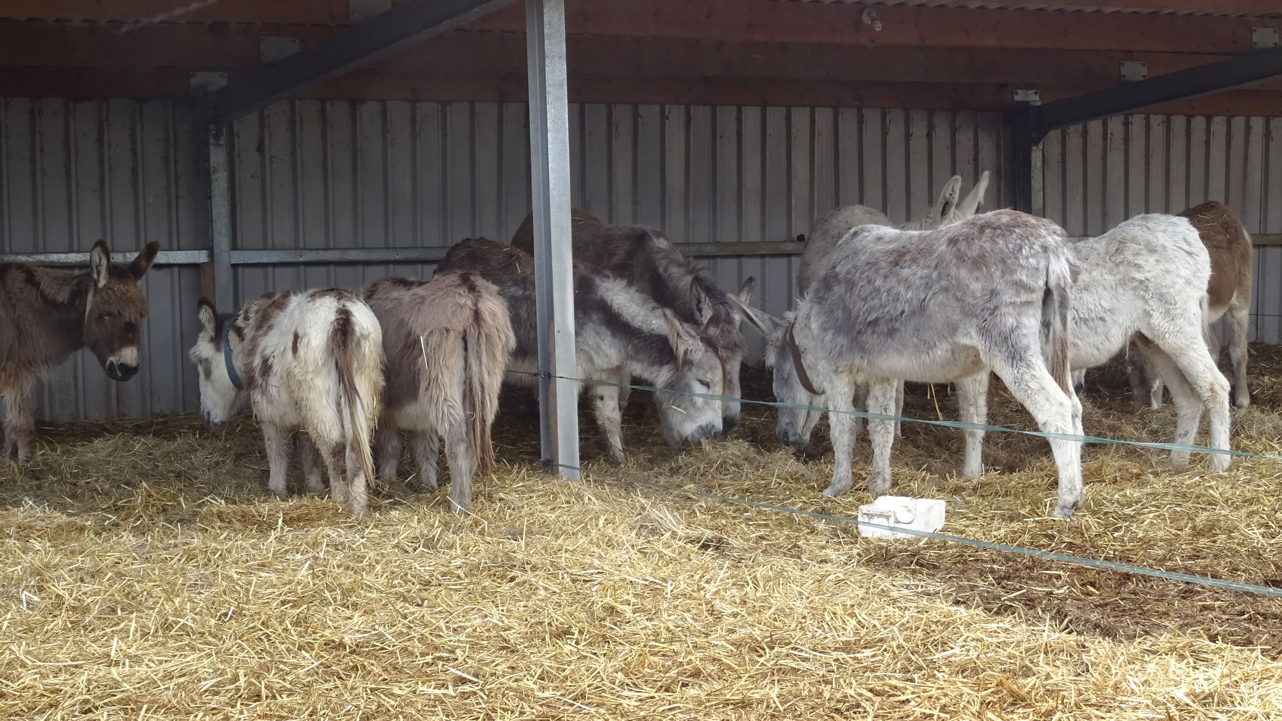 http://www.donkeyrescue.co.uk/wp-content/uploads/2017/02/HomeSlide_Stable1.jpg
