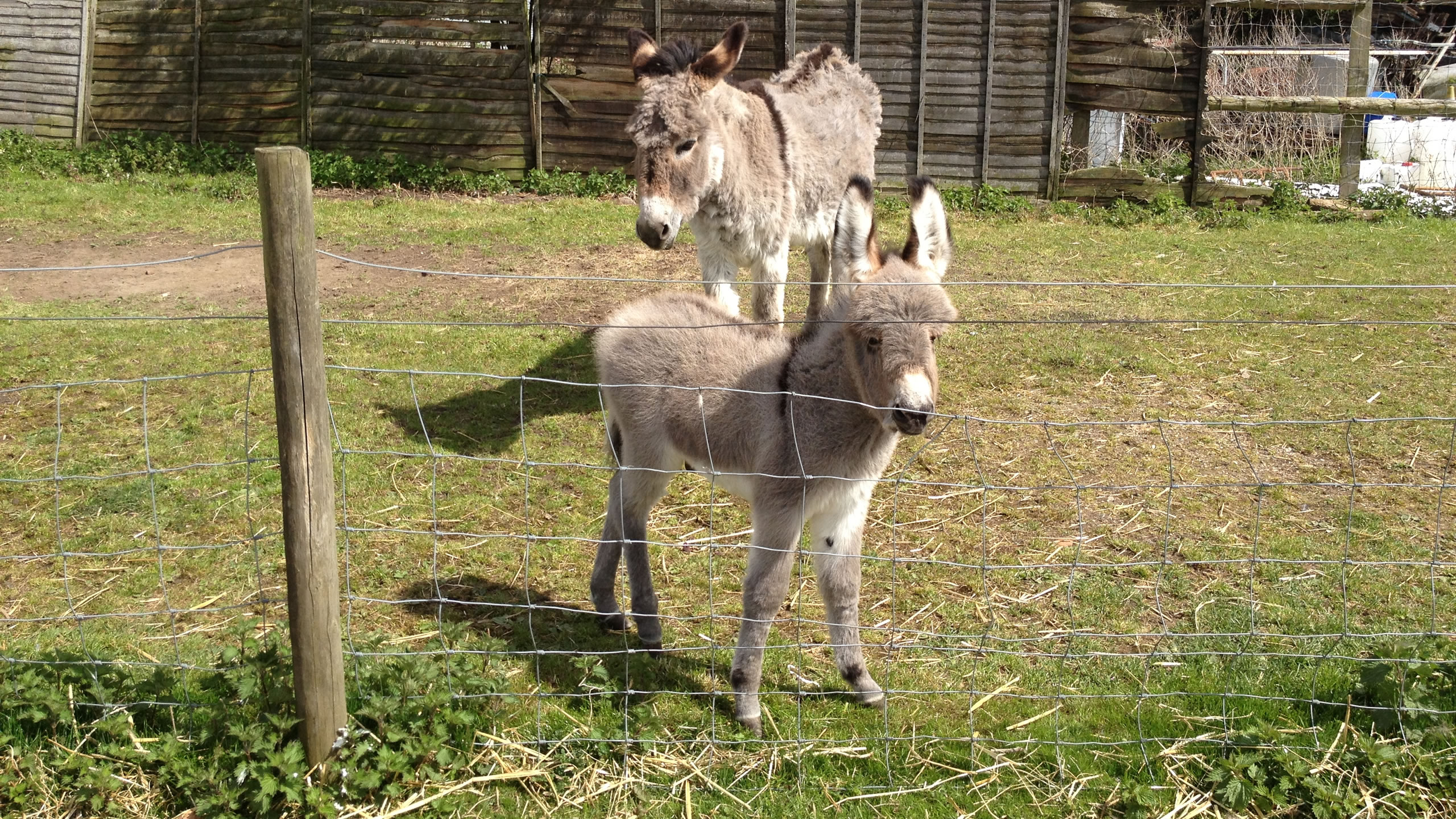 http://www.donkeyrescue.co.uk/wp-content/uploads/2017/02/HomeSlide_Viscount.jpg